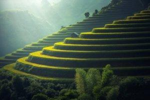 sculpted green rice terraces, Bali, Indonesia