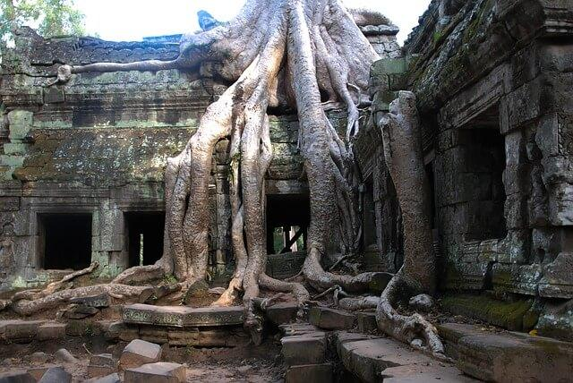 Angkor Thom temple showing ruins with overgrown trees