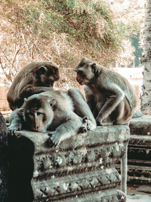 Monkies at Angkor Wat