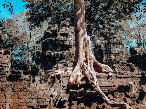Ta Prohm Temple tree root growing inside stone