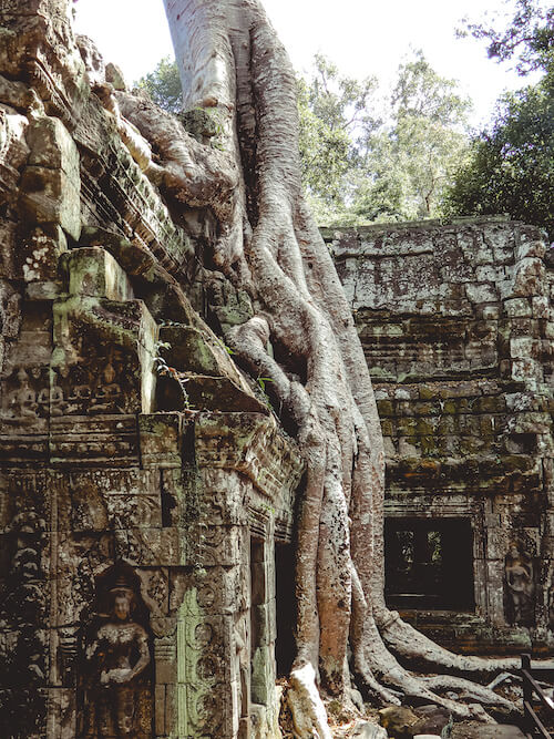 Ta Prohm Tomb Raider shot