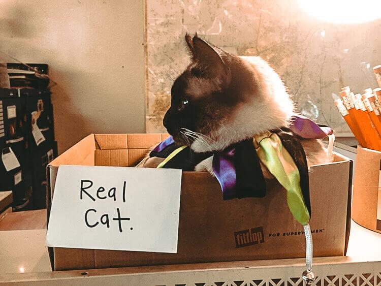 A cat named Bea