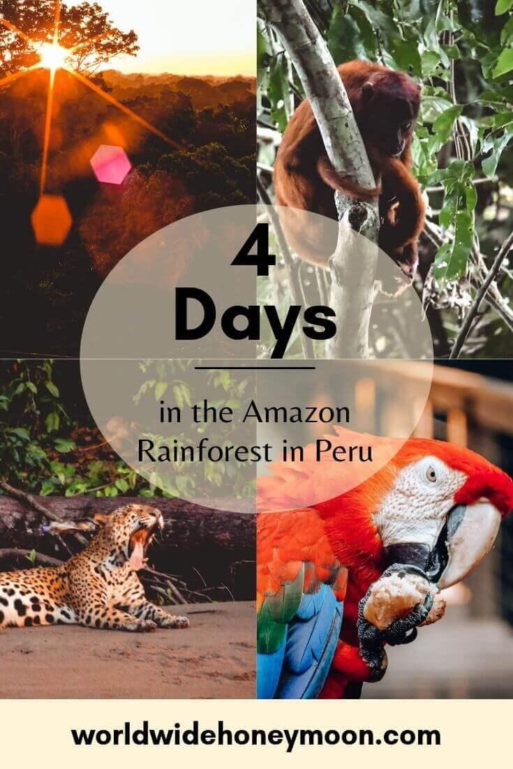 4 Days in the Amazon Rainforest in Peru - Tambopata National Reserve