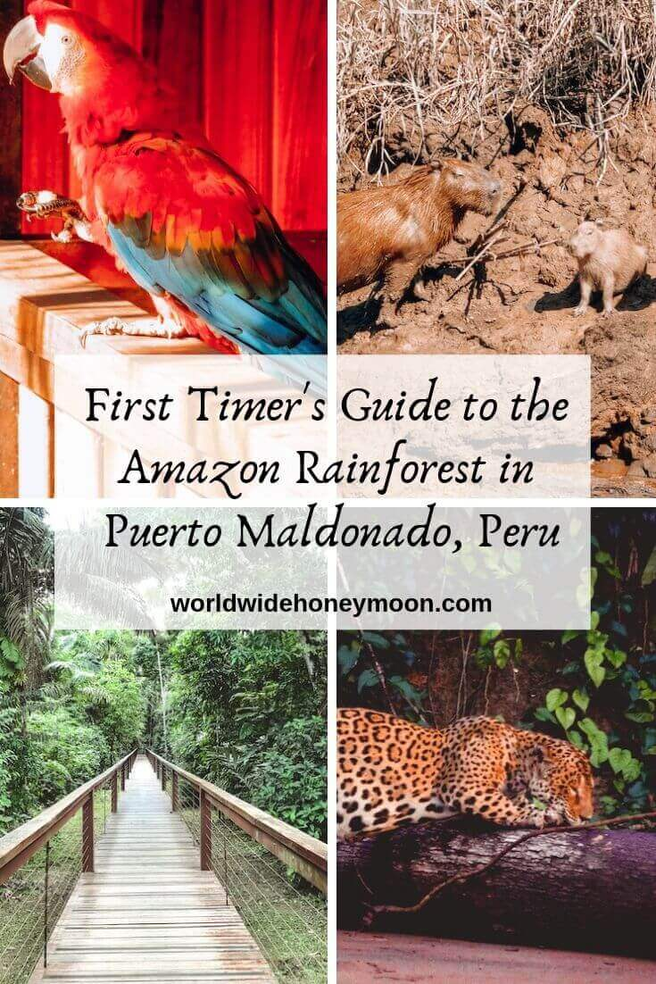 First Timer's Guide to the Amazon Rainforest Peru
