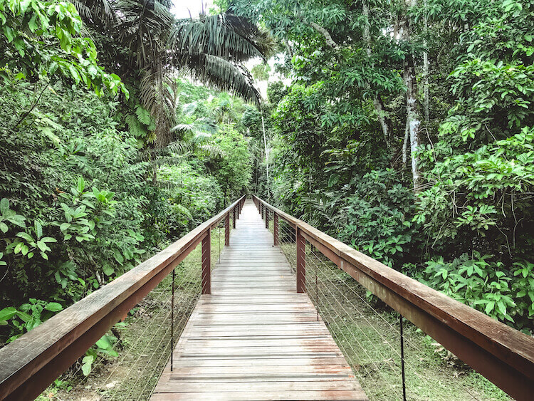Pathway to the rooms at the Tambopata Research Center