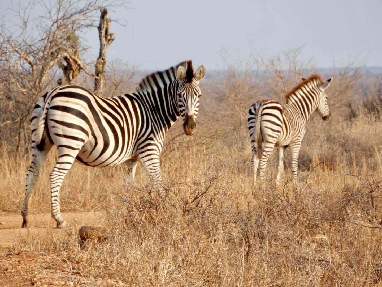 safari honeymoon   South Africa itinerary for 2 weeks