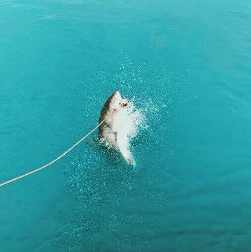 Shark Cage Diving in Gansbaai