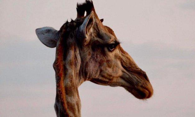 African Safari Budget Guide