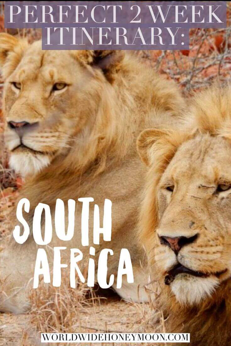 Perfect 2 Week Itinerary- South Africa
