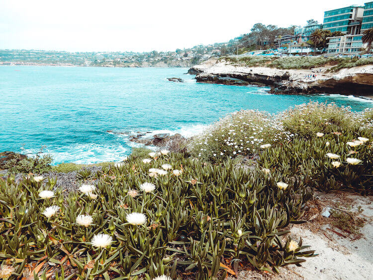 La Jolla Cove plants and coastline