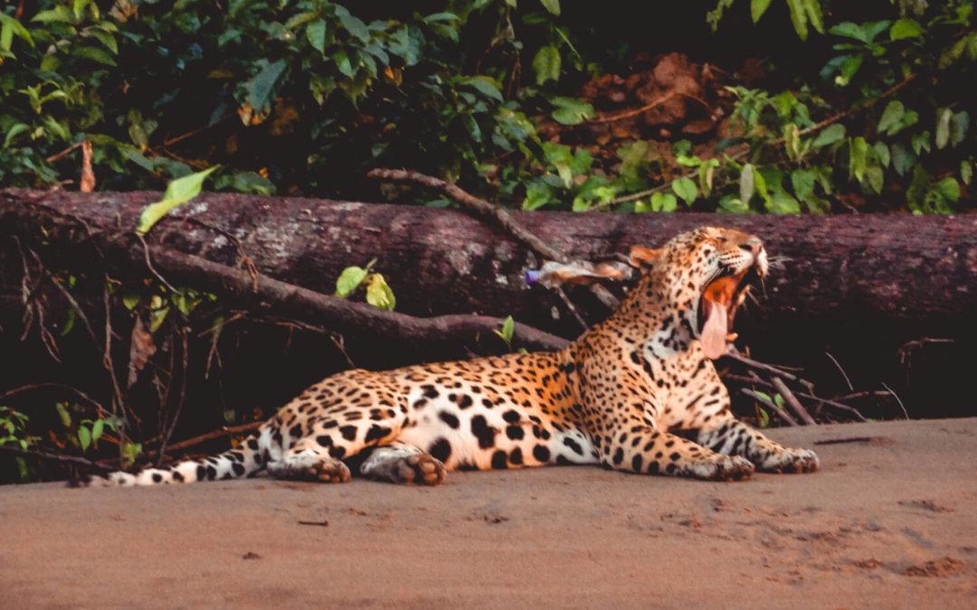 The Best Peru Amazon Lodge: Tambopata Research Center