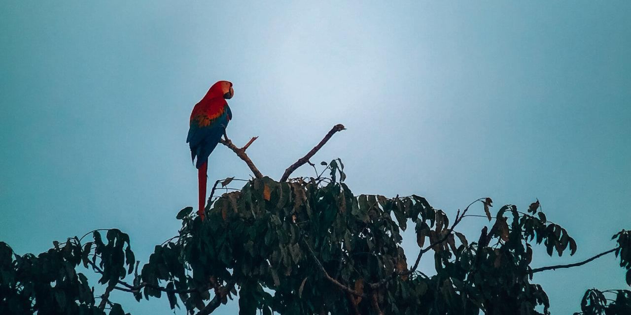 First Timer's Guide to the Amazon Rainforest in Peru