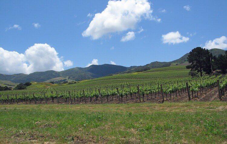 Santa Ynez wine valley in California