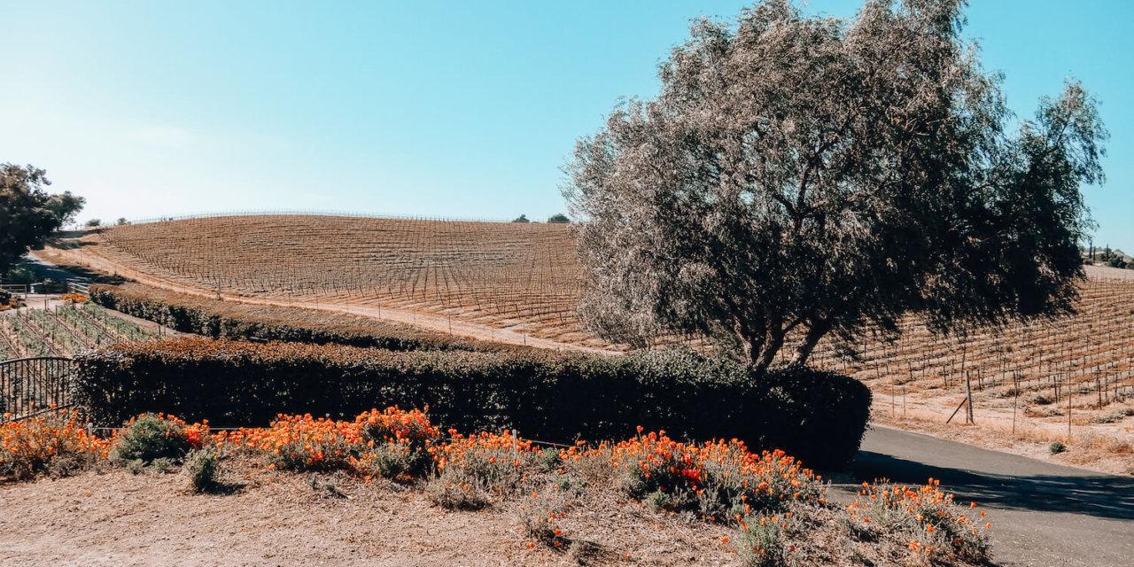 The 10 Best Santa Ynez Wineries and Solvang Wine Tastings (Plus a Santa Ynez Wineries Map!)