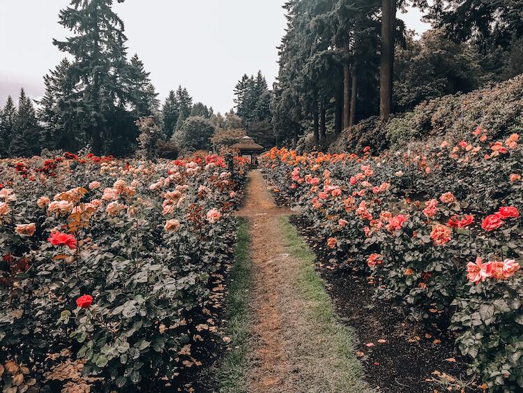 International Test Rose Garden in Portland