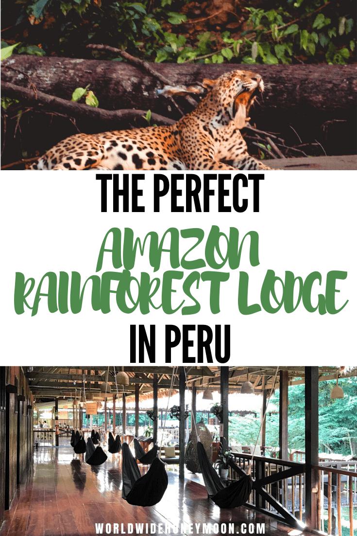 Peru Amazon Rainforest | Amazon Rainforest Animals | Amazon Rainforest Photography | Amazon Rainforest Travel | Peruvian Amazon Rainforest | Amazon Itinerary | Tambopata Peru | Tambopata Research Center | Tambopata National Reserve | Tambopata Peru Lodges | Tambopata Amazon Rainforest#peruvianamazon#amazonrainforest#tambopataresearchcenter#perutravel
