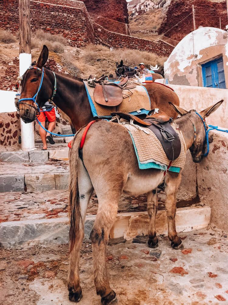 Donkeys on the steps in Santorini Greece