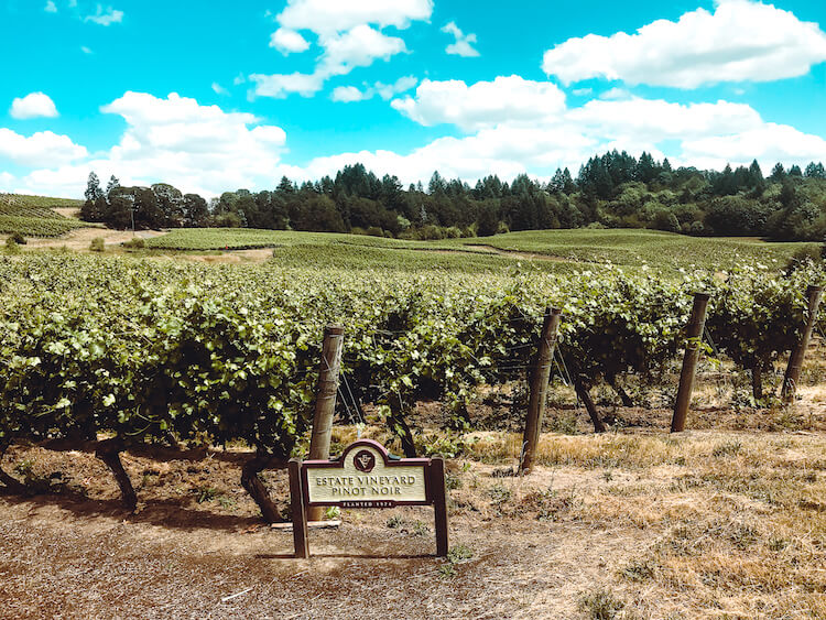 Elk Cove Vineyards in the Willamette Valley