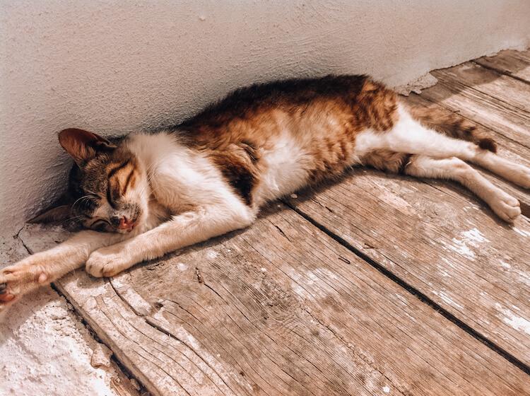Kitty sleeping in Santorini, Greece
