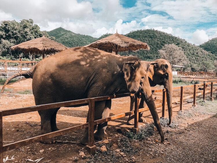 Elephant Nature Park during 10 days in Thailand