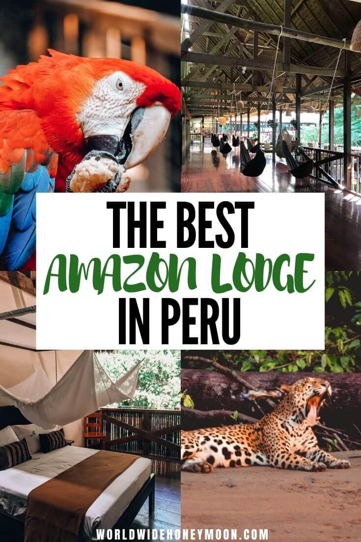 Peru Amazon Rainforest | Amazon Rainforest Animals | Amazon Rainforest Photography | Amazon Rainforest Travel | Peruvian Amazon Rainforest | Amazon Itinerary | Tambopata Peru | Tambopata Research Center | Tambopata National Reserve | Tambopata Peru Lodges | Tambopata Amazon Rainforest #peruvianamazon #amazonrainforest #tambopataresearchcenter #perutravel