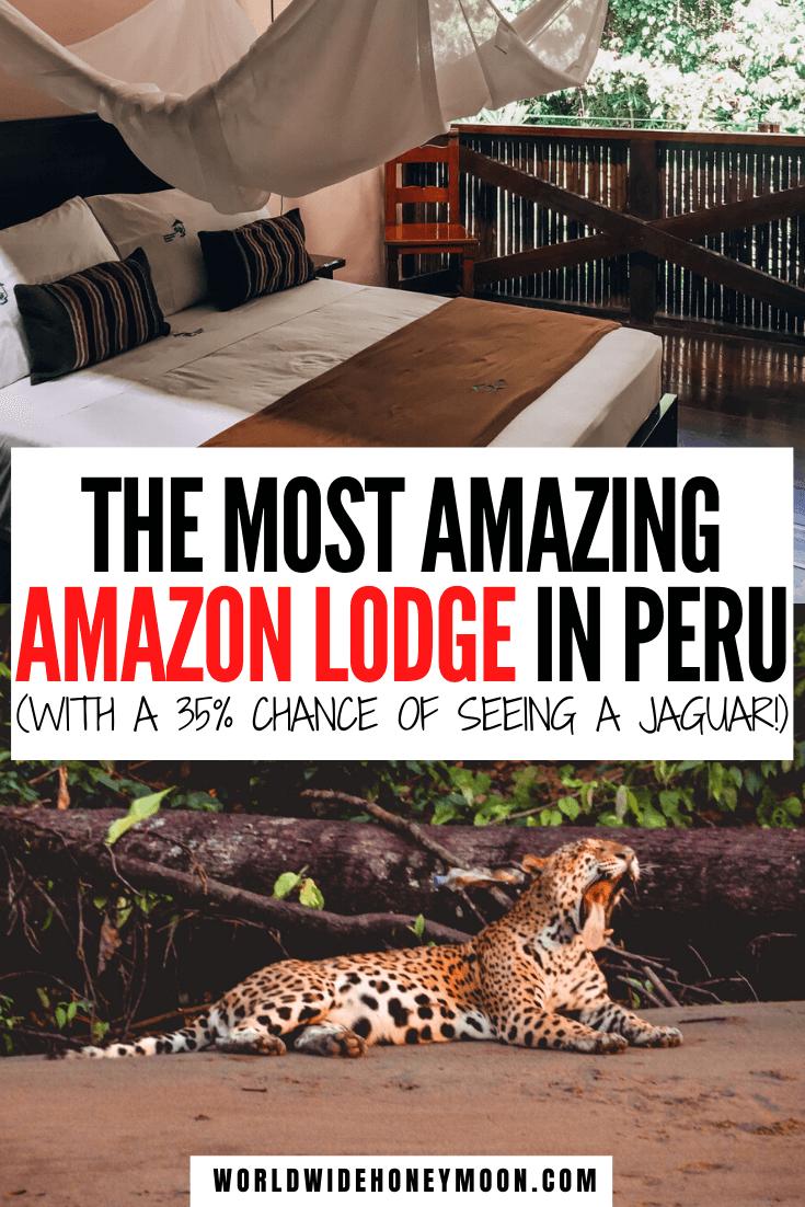 This is hands down the best Amazon Rainforest Lodge | Amazon Rainforest Animals | Amazon Rainforest Travel | Amazon Rainforest Photography | Peruvian Amazon Rainforest | Peruvian Amazon Travel | Peru Travel | Tambopata Research Center | Tambopata Peru National Reserve #tambopataresearchcenter #peruvianamazon #amazonrainforest #peru