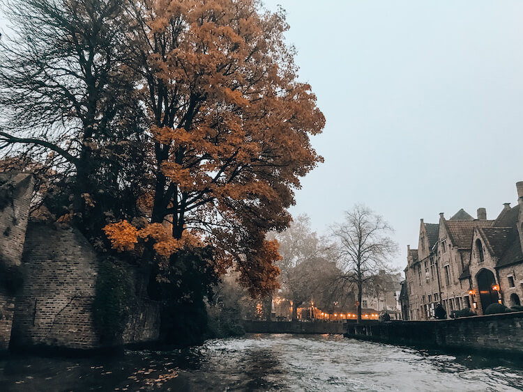 Tree with orange leaves drapped over a canal in Bruges