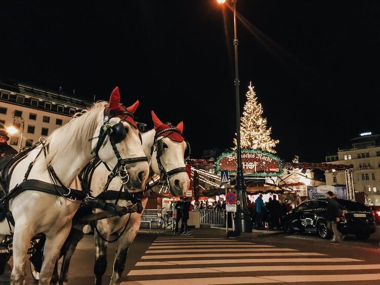 Lippizaner Horses in Front of the Am Hof Christmas Market