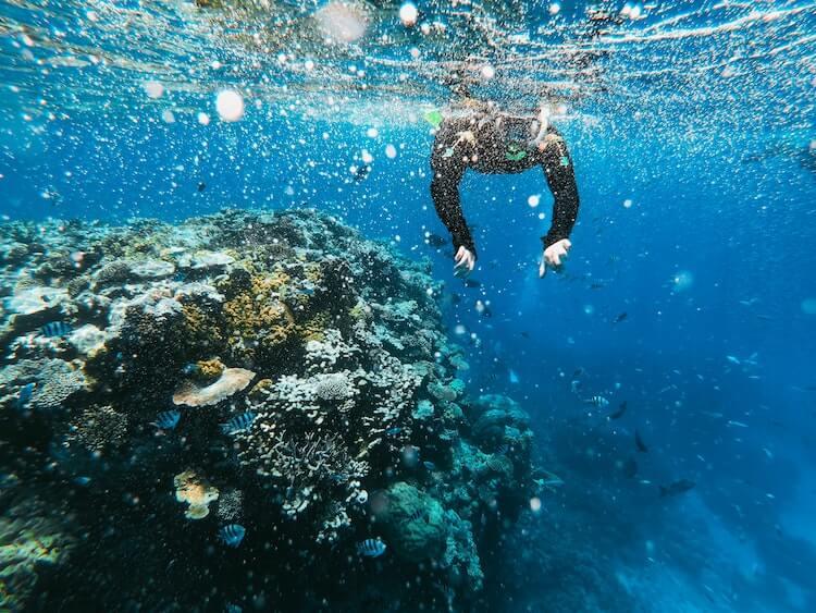 Snorkeling in the Great Barrier Reef, Australia