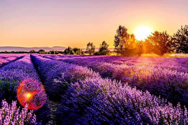 Lavender fields in Provence- Best European Honeymoon Destinations