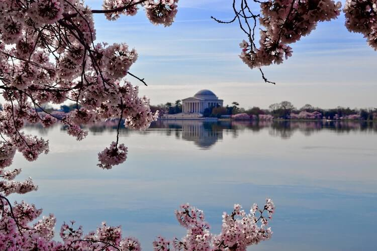 Cherry Blossoms framing the Jefferson Memorial on the Tidal Basin in DC- 3 Days in Washington Dc Itinerary