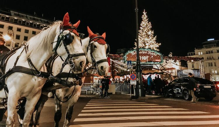 Lippizaner horses outside of the Am Hof Christmas Market in Vienna in December