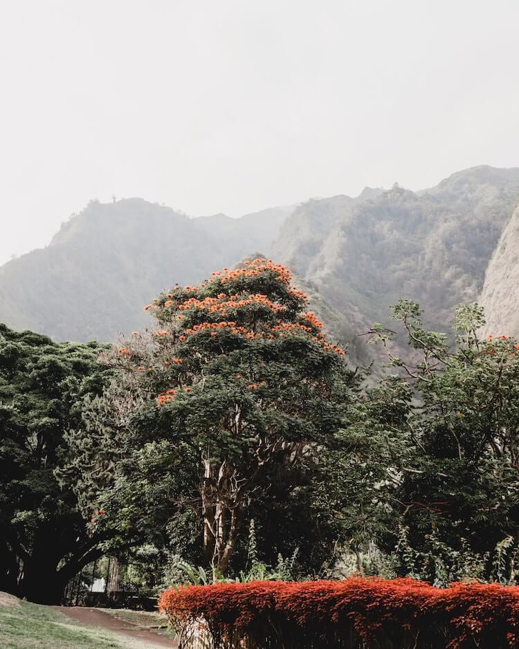 Beautiful greenery around Maui