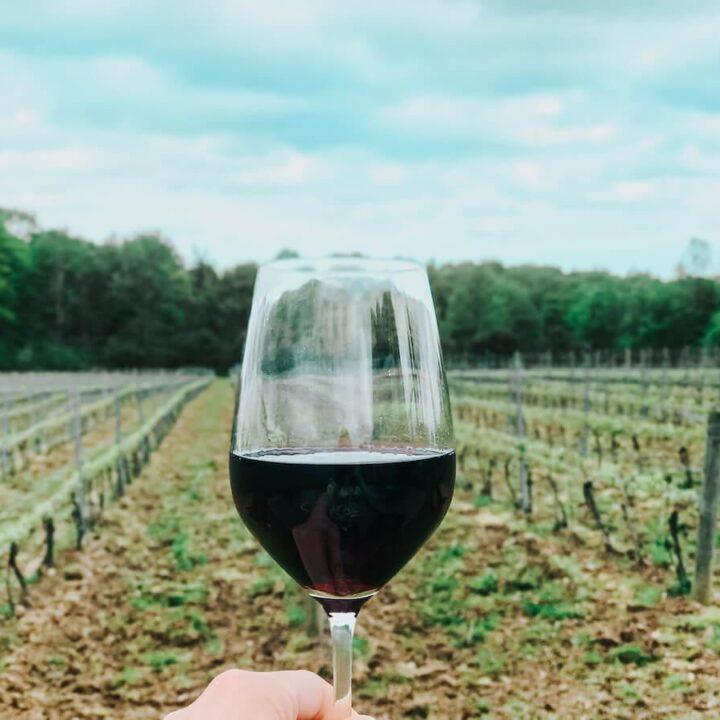 M Cellars Meritage and vineyards- Best Wineries in Northeast Ohio
