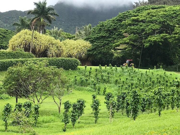 Oahu, Hawai'i Sierra Schmidt
