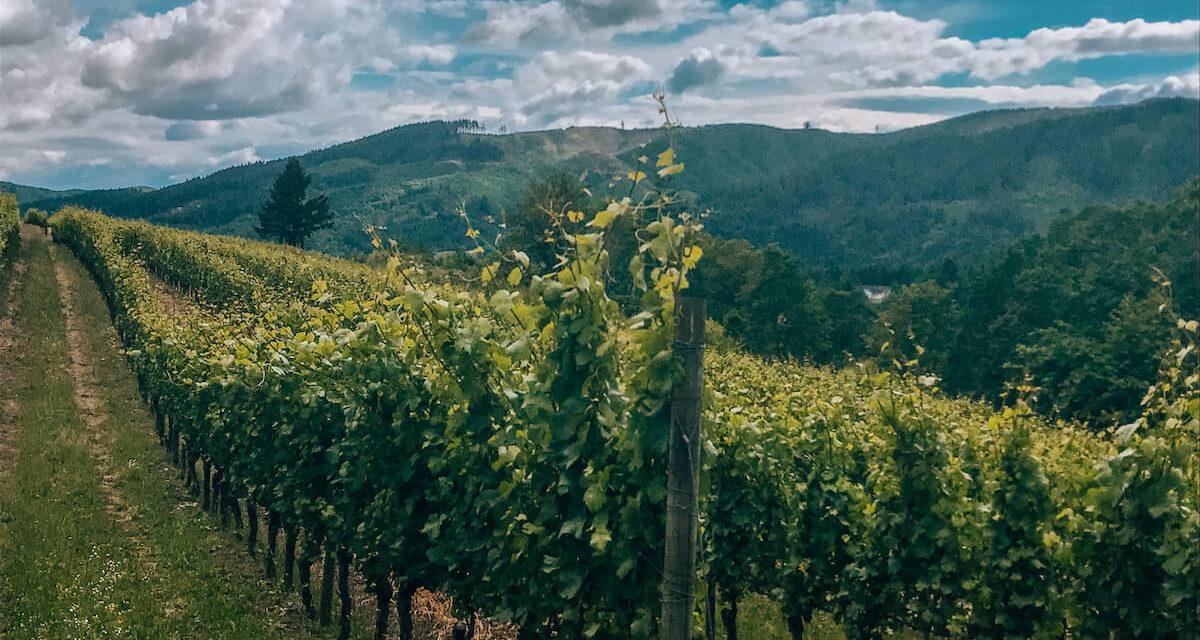 Top Wine Destinations in the World to Visit