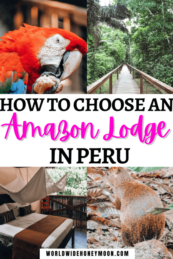 How to Choose Where to Visit in the Amazon Rainforest in Peru | Amazon Rainforest Lodge | Amazon Rainforest Peru | Peruvian Amazon Rainforest | Peru Photography Amazon Rainforest | Peru Travel Beautiful Places Amazon Rainforest | Peru Animals Animal Rainforest | Peru Nature Amazon Rainforest | Peru Forest Amazon Rainforest | Iquitos Peru | Tambopata Peru | Manu Peru | Tambopata National Reserve | Peruvian Amazon Travel