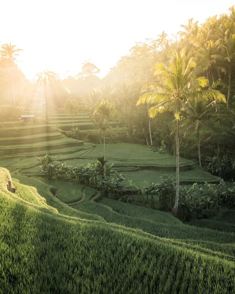 You Should Consider Bali For Your December Honeymoon