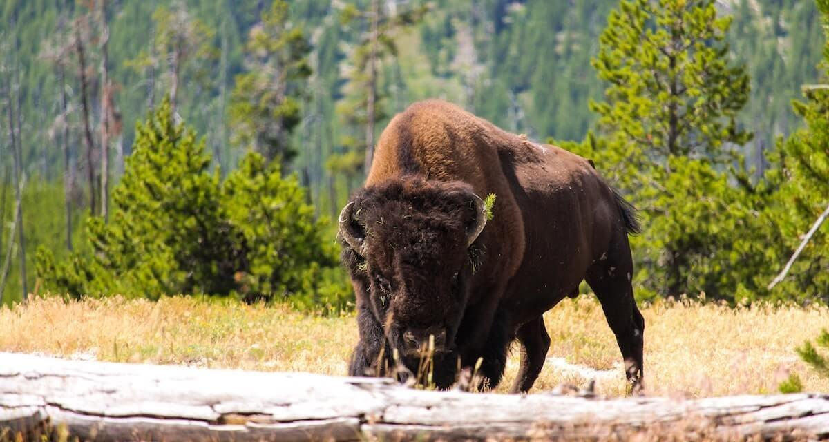 The 10 Best Wildlife Trips in North America
