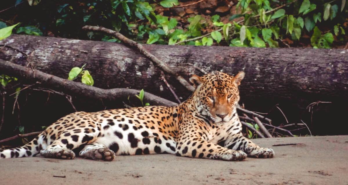 Top 10 Bucket List Wildlife Encounters