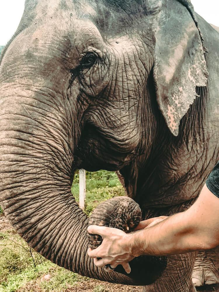 Looking into the eyes of an elephant at Elephant Nature Park