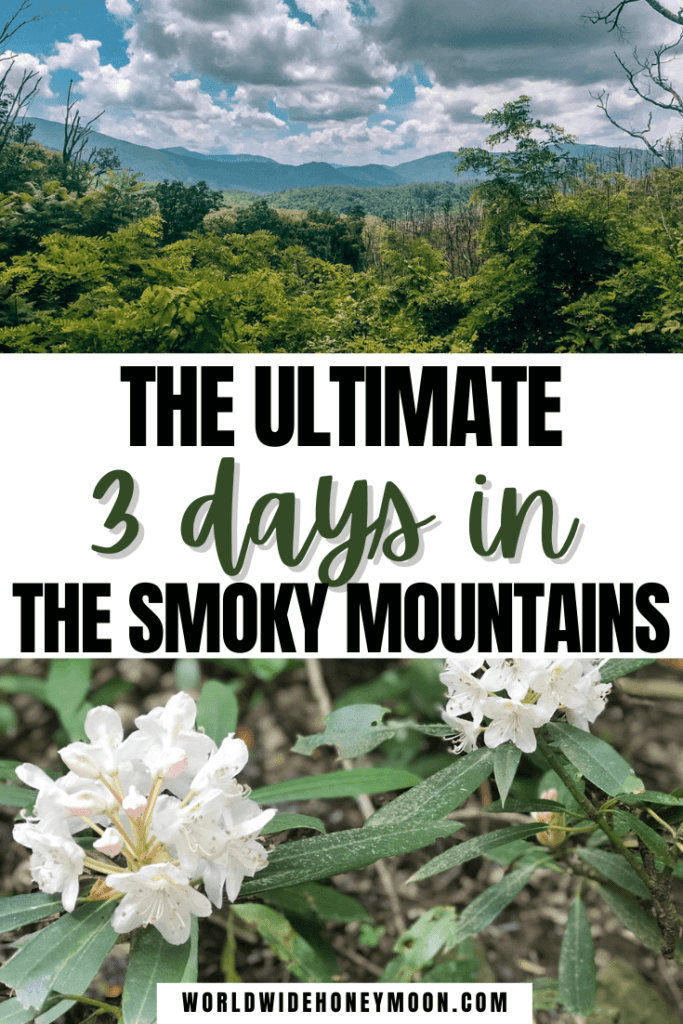 3 Days in the Smoky Mountains | Top photo shows a view of the mountains from a trail and the bottom is an up close look of flowers