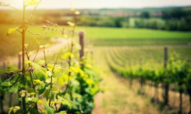 The 10 Best Wineries Near Shenandoah National Park You Have to Try