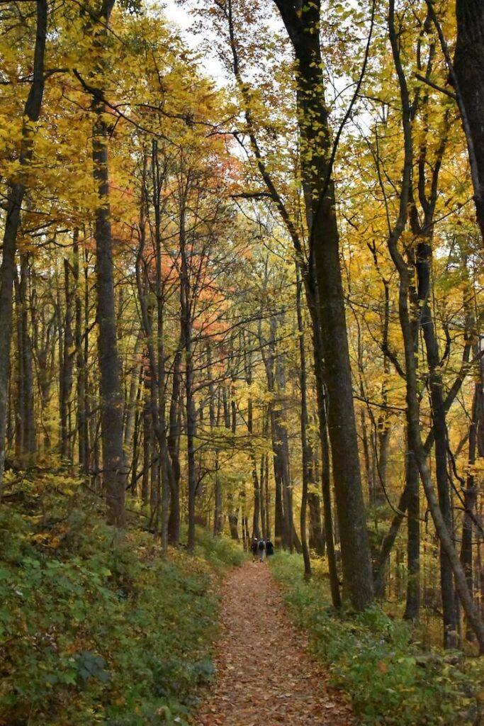 Hiking in the Fall in Shenandoah National Park with colorful fall foliage on the trail - Best Time to Visit Shenandoah National Park