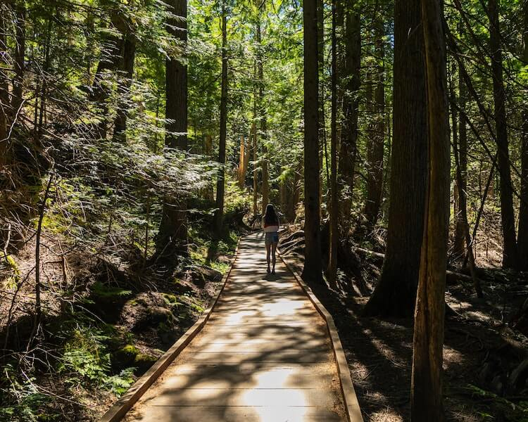 Hiking trail surrounded by trees at Glacier National Park