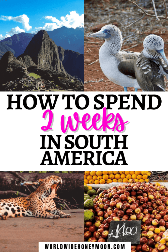 How to Spend 2 Weeks in South America - Photos top right going clockwise- two blue footed boobies standing together with one cleaning his wings, fruit for sale at a market, jaguar yawning along a river bank, Machu Picchu on a sunny day.png