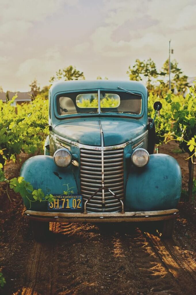 Old blue truck parked in the vineyard