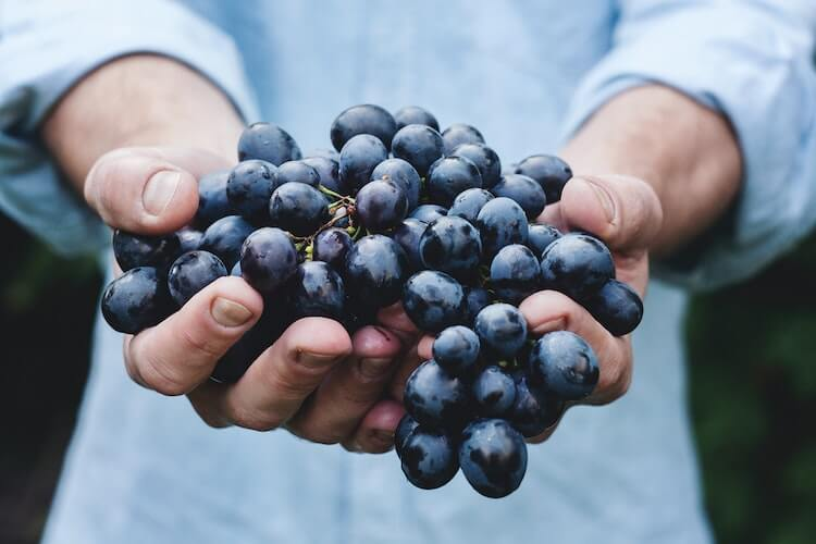 Person holding deep purple grapes in their hands
