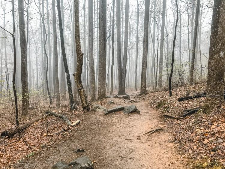 Start of the Old Rag Hike with a foggy woods
