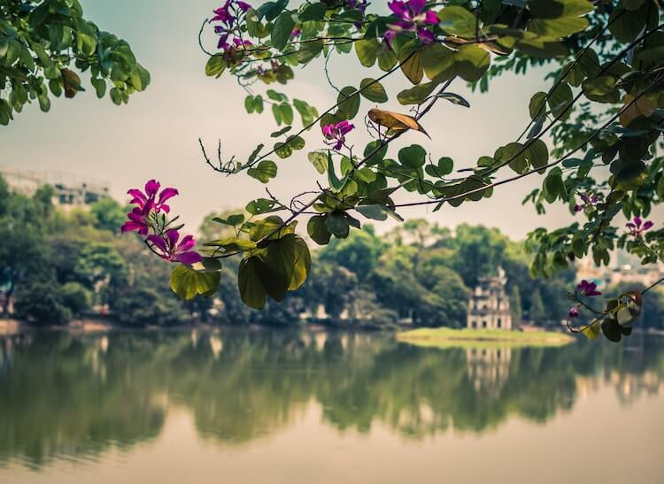 Views of Hoan Kiem Lake with a tree with purple blossoms in the foreground